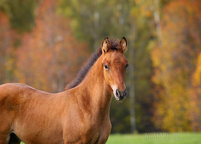 foal by mari-mi
