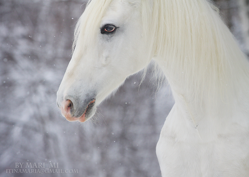 white beauty by mari-mi