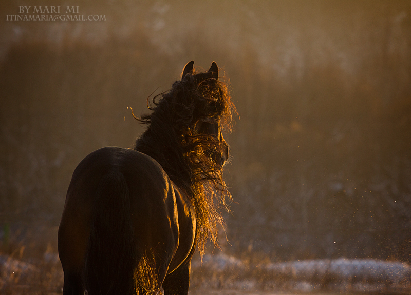 winter sunset by mari-mi