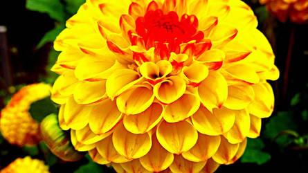 In Bloom by azin-sooalo