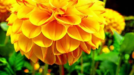 flower by azin-sooalo