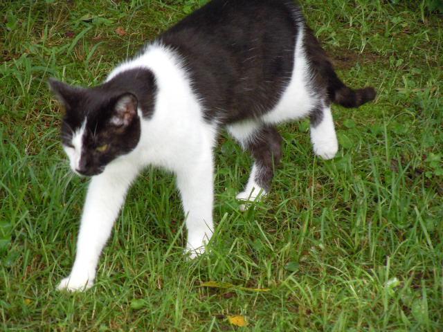 Mis Gatos! (My cats) Dc_by_leopardfire_prod-d323say