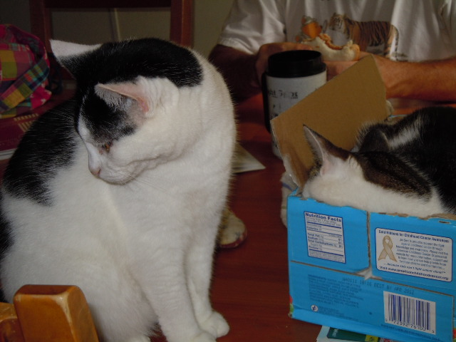 Mis Gatos! (My cats) Angel_by_leopardfire_prod-d323sg1