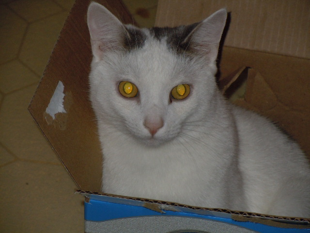 Mis Gatos! (My cats) Blizzard_by_leopardfire_prod-d323sw8