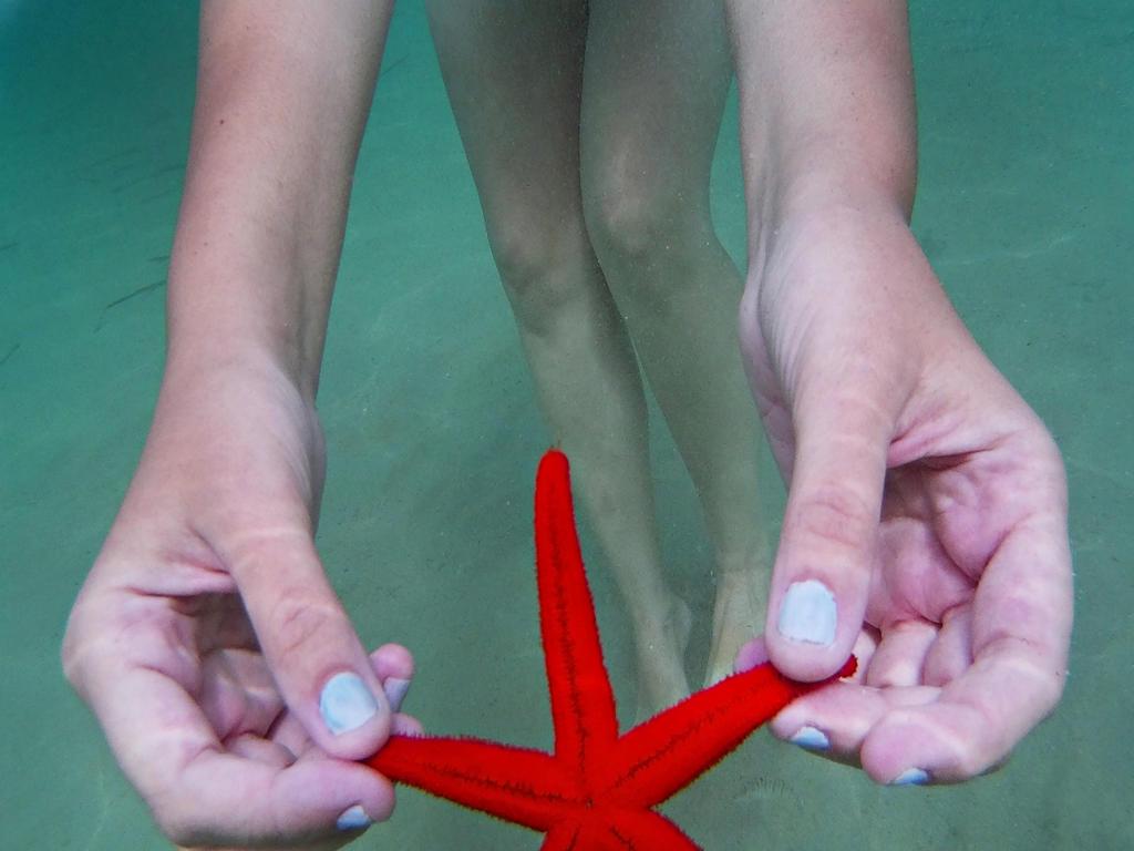 Starfish by afyllian