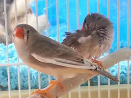Pet shop birds