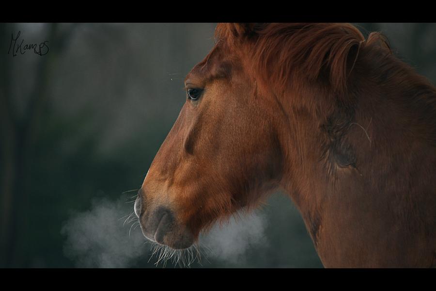 Breathe by xMelis
