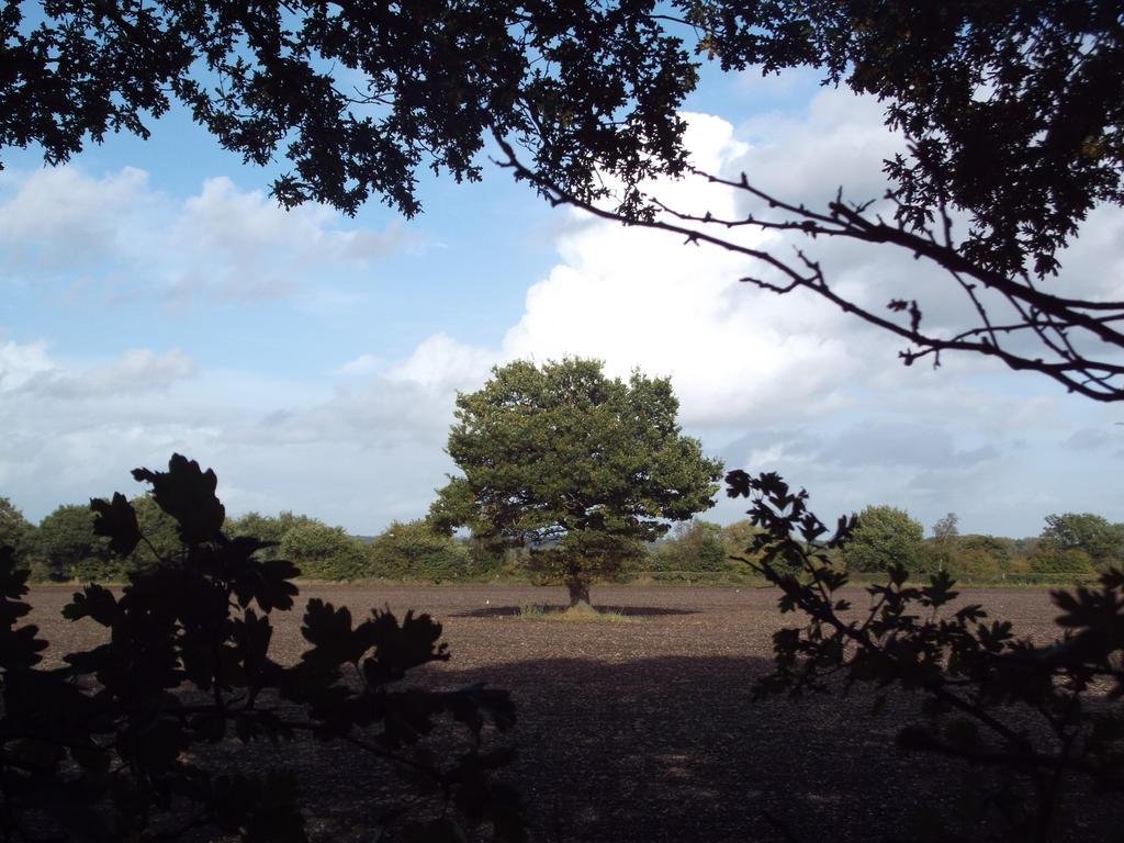 The lone oak by buttercupminiatures