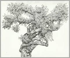 Tree practice.