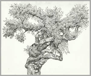 Tree practice. by Tess-The-Horrible