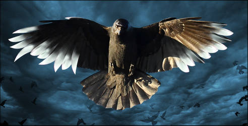 Crow of blades