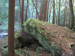 Forest 8