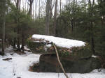 Winter Forest 8