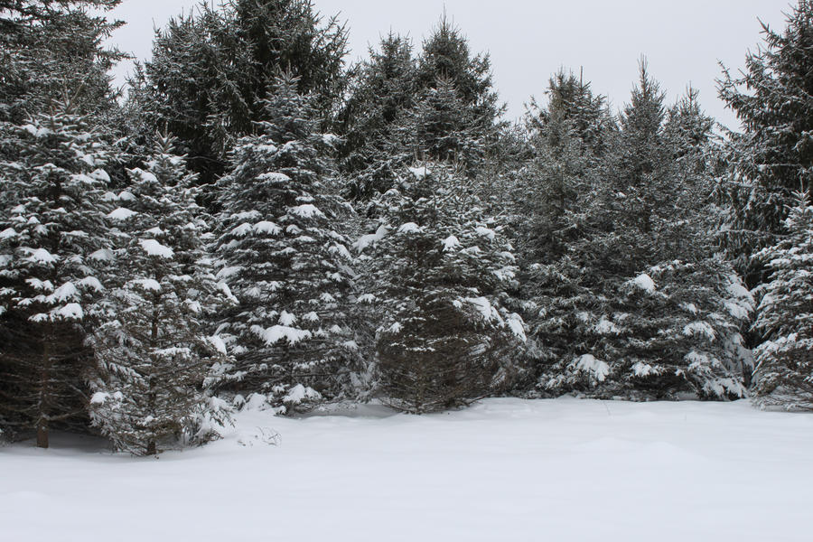 Winter Wonderland 4 by Salamander-Stock