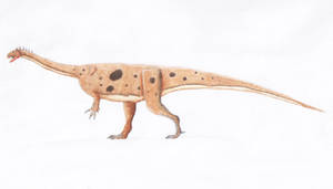 Massospondylus carinatus by PaleoJoe