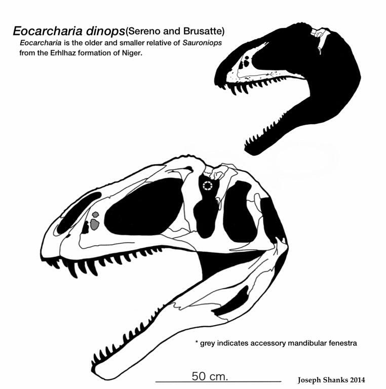 Eocarcharia dinops by PaleoJoe