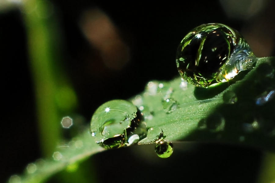 grass macro photography - photo #18
