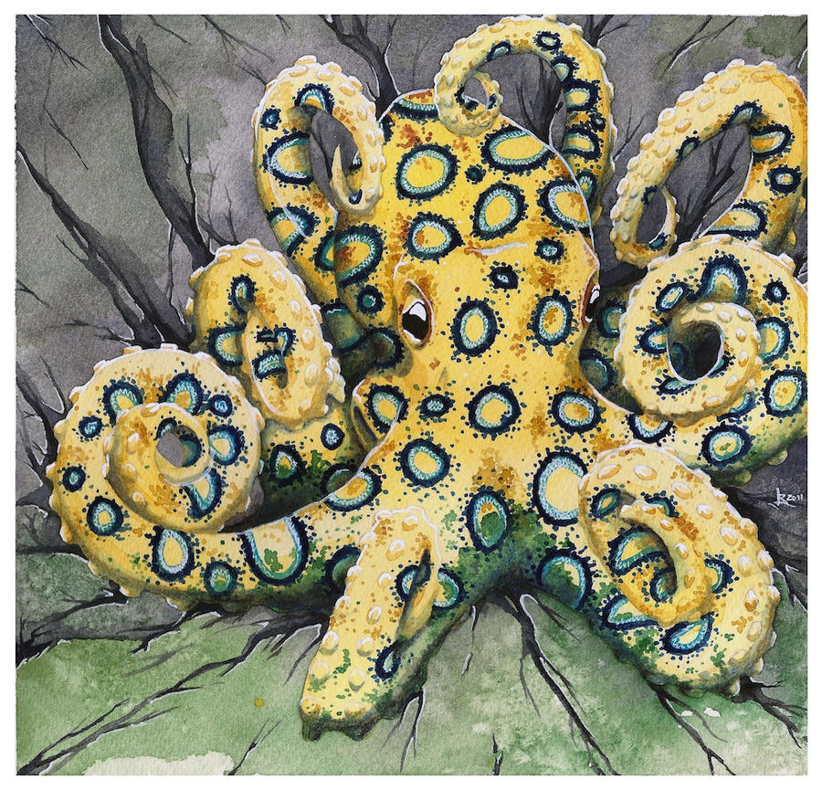 Blue-ringed Octopus by Taiyo85 on DeviantArt
