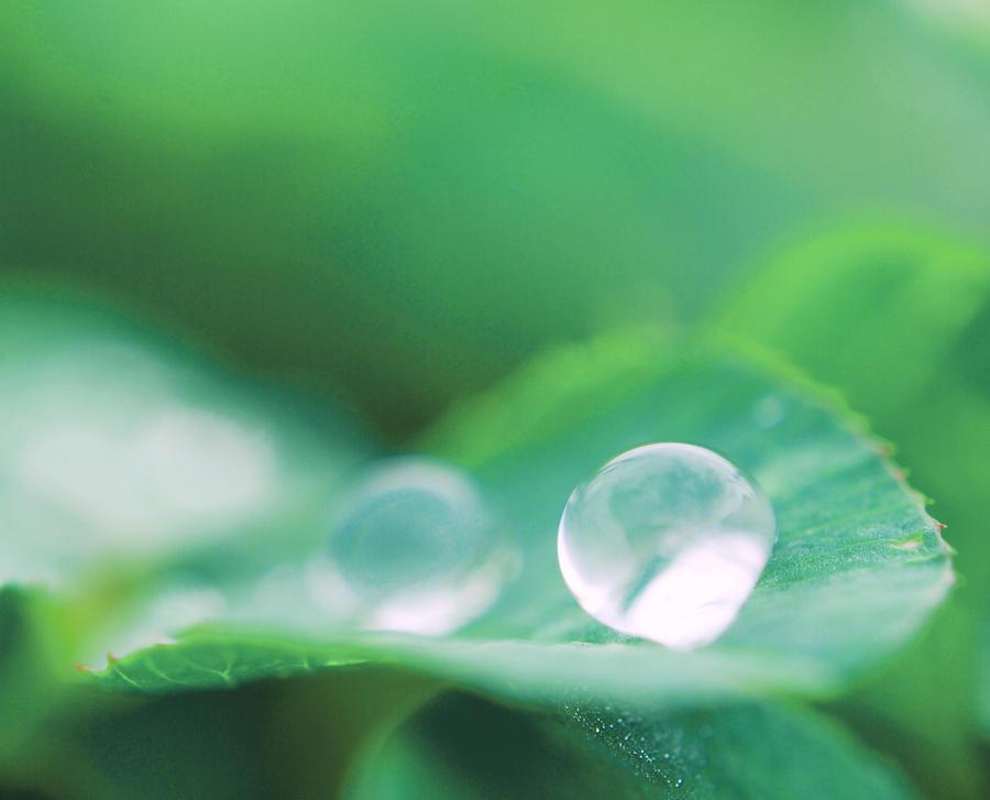 Spring Rain by RawPoetry