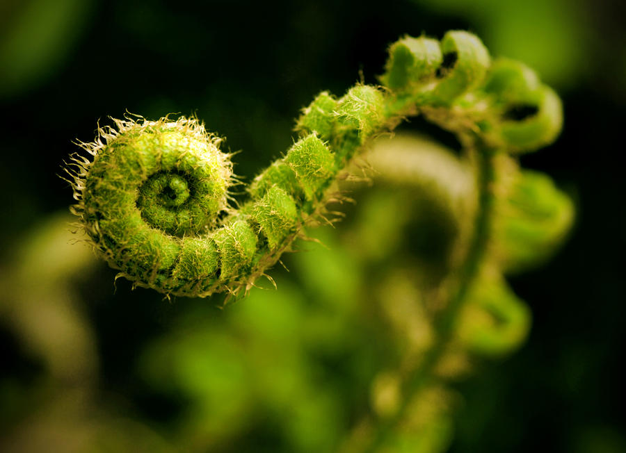 Swirl by RawPoetry