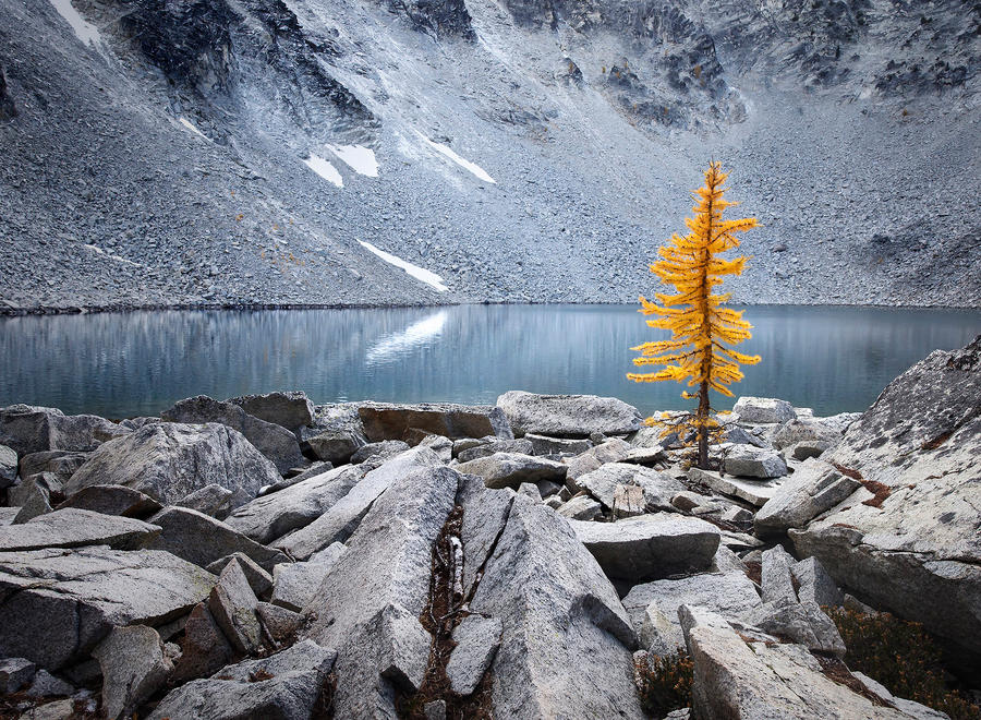 Lone Larch by RawPoetry