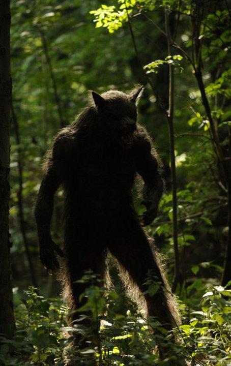 http://orig07.deviantart.net/98de/f/2011/099/0/1/real_werewolf_by_vikinghiccup-d3dlzcr.jpg