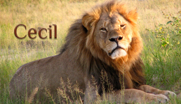 Cecil will never, be forgotten. by TheReticChick