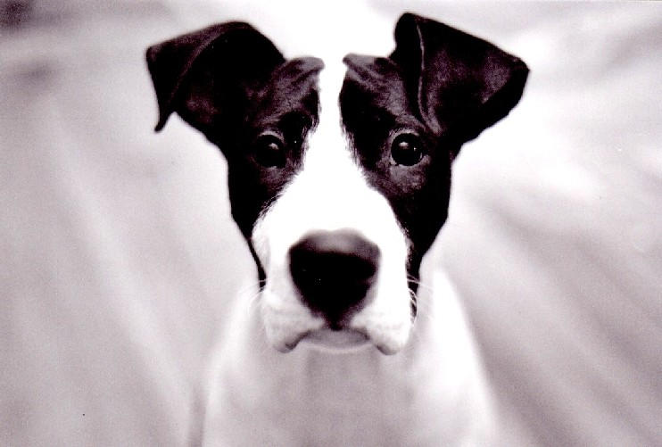 dog, Paco by bouddha3