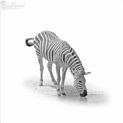 zebra minimal by LadyCarnal