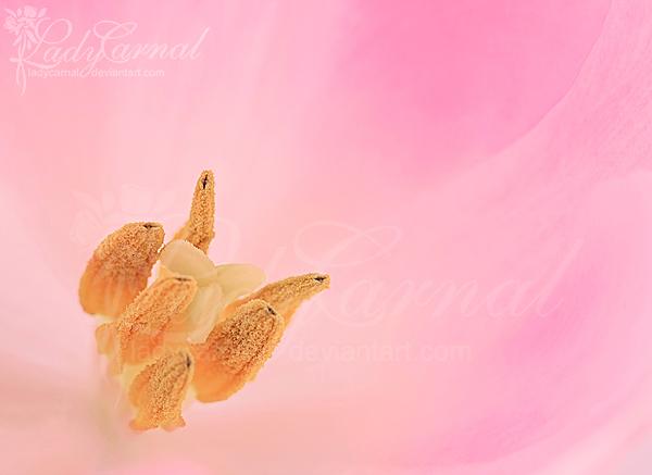 Spring by LadyCarnal