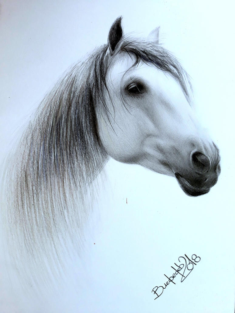 Pegasus by Vladimir12908