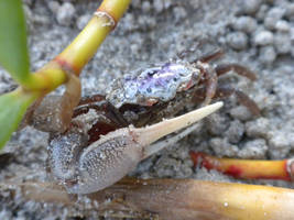 crab 08 by Adrastia217