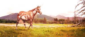 KIRI = Field Of Dreams by Eagle-Cry-Designs