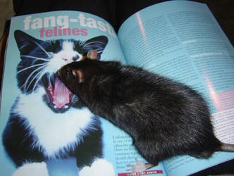 Rat on Cat?? by Addiqtion