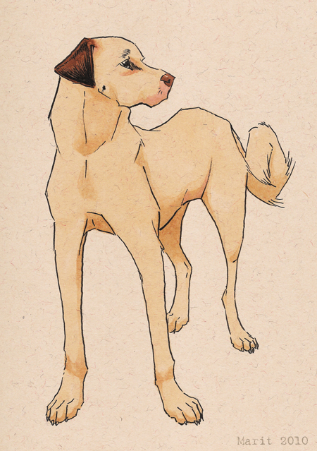 Anatolian shepherd by paintedadelaide