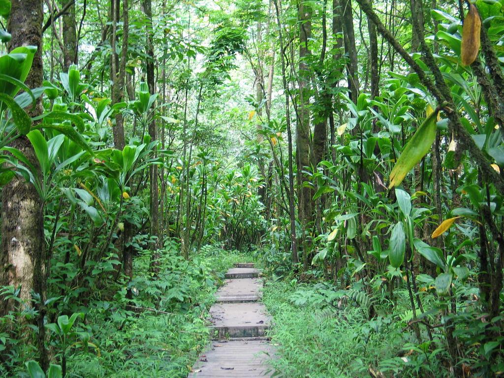 scrap hawaiian jungle by nickrak on deviantart. Black Bedroom Furniture Sets. Home Design Ideas