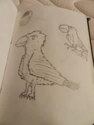 Birds by 123nukume
