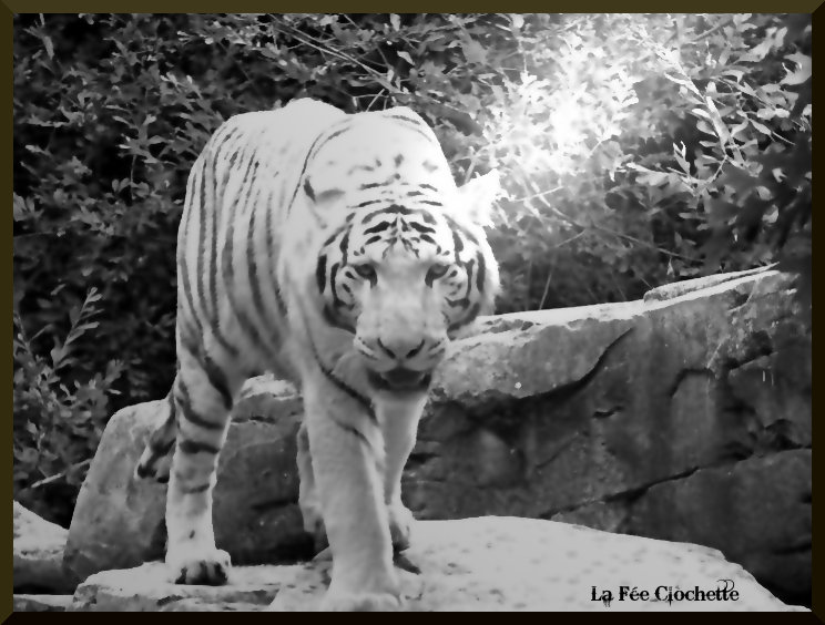 Zoo 8 by girlnori