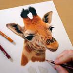 Giraffe | work in progress