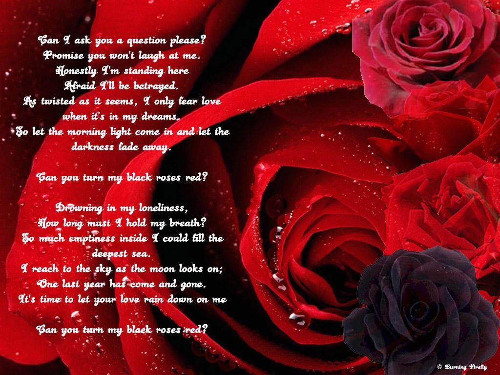 Roses by Kindred-Spirit