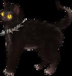 Lykoi Cat by LonewolfKumniver