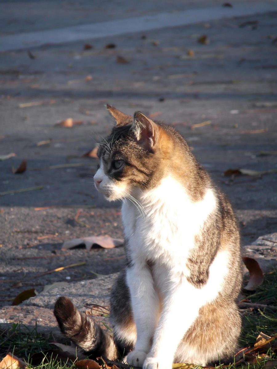 Meow by xxritsu-chanxx