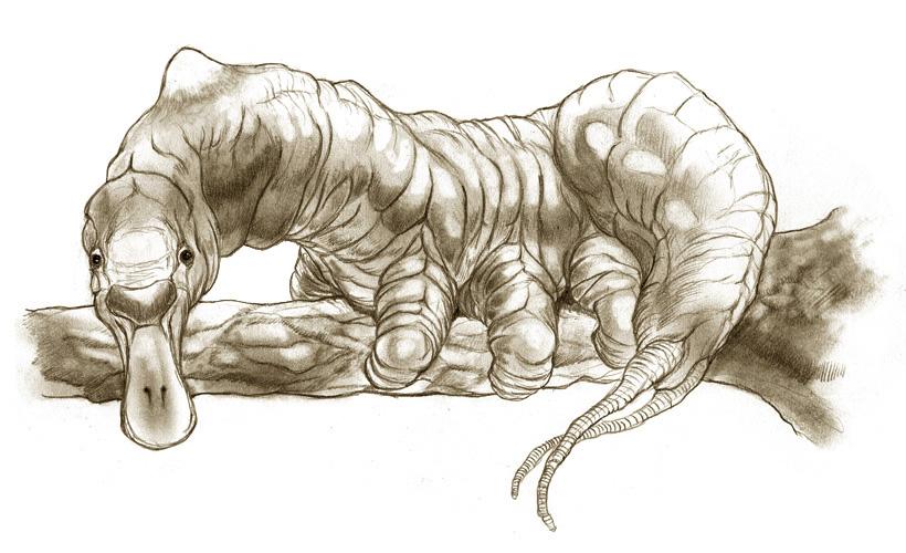Platypillar by thomastapir