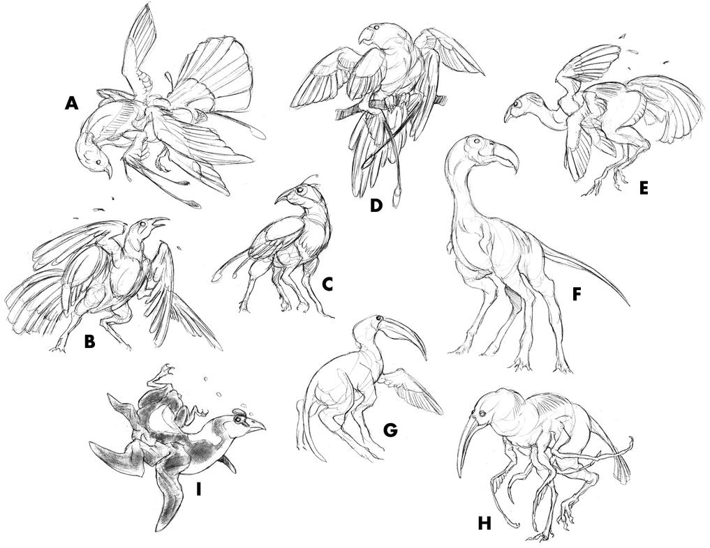 Postchicken Studies by thomastapir