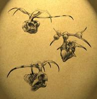 Ceratroppsians by thomastapir
