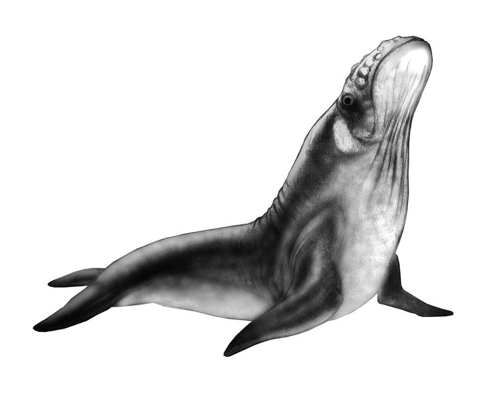 Sealtacean by thomastapir
