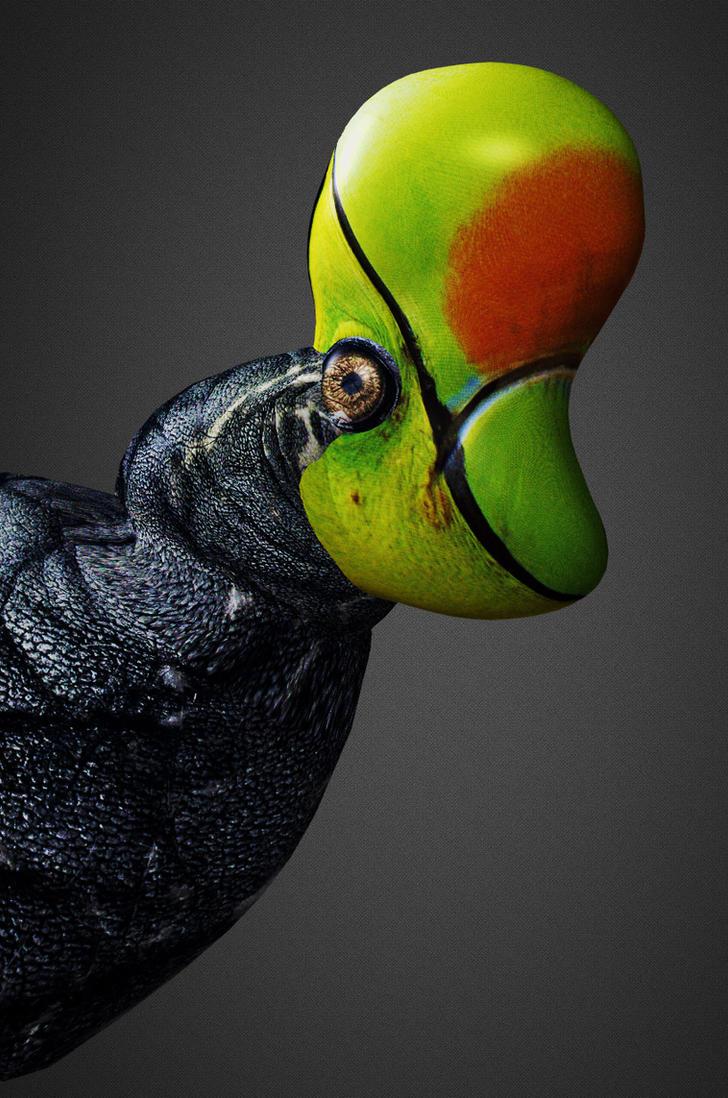 Mango-Billed Elephantoucan by thomastapir