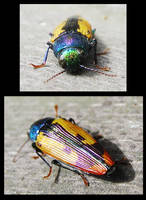 Beauprestid by thomastapir