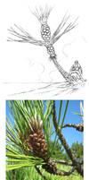 Palm Cons 02