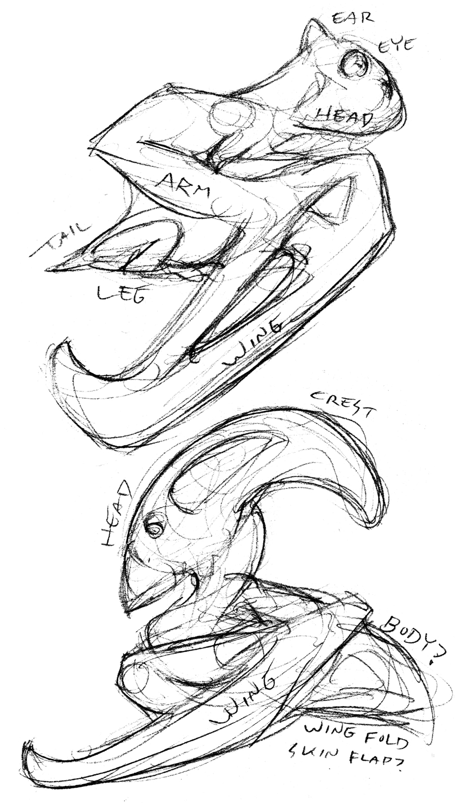 Pterobat Studies